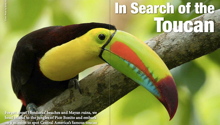 In_Search_of_Toucan